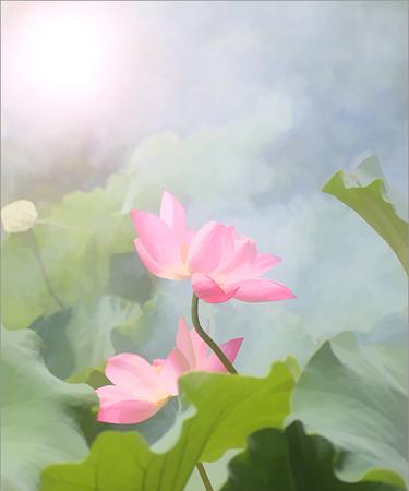 Lotus_Flower_IMG_1463-375X450