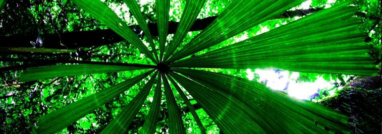 circular palm