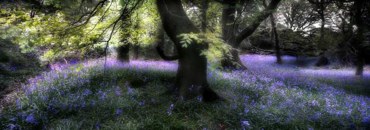 england grove