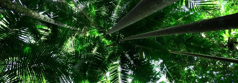 minyon palms